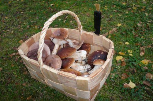 aktiviteetit-sienia-korissa